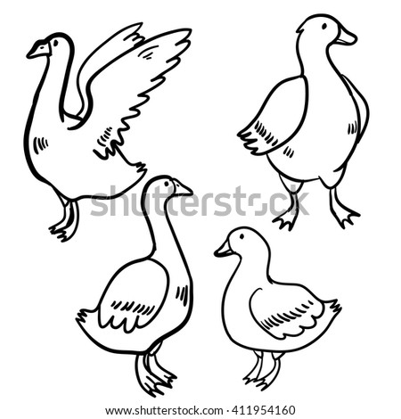 Vector Illustration Set Geese Ducks Handy Vector de stock (libre de ...