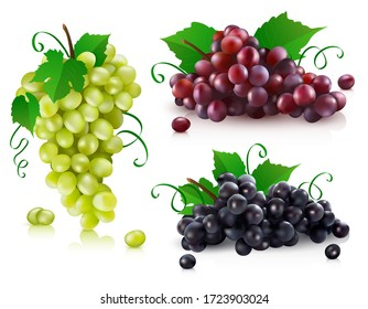Vector illustration of a set of green grapes, black grapes and red grapes. 3d realistic vector red, black and green bunch of grapes isolated on white background.