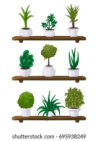 Vector illustration of a set of house plants in pots on wooden shelves and white background