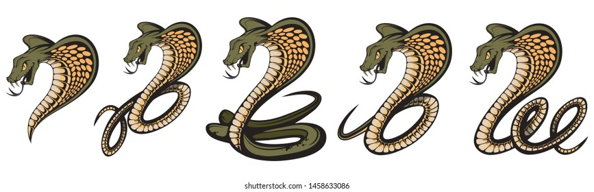 Vector illustration Set of a king cobra with hood. Snake Cobra is ready to hit with fangs and tongue. Viper snake. Mascot realistic King cobra illustration for a sport team. Vector graphics to design