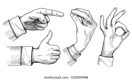 Vector illustration of a set of male hand gestures. Pointing finger, like or thumb up, Italian gesture and ok sign. Hand drawn vintage engraving style.