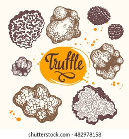 Vector illustration with set of mushrooms in sketch style. Hand-drawn truffle on white background. Delicatessen French products. Autumn forest harvest.