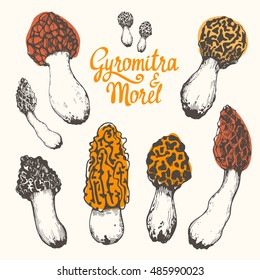 Vector illustration with set of mushrooms in sketch style. Hand-drawn morel and gyromitra on white background. Autumn forest harvest.