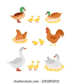 Vector illustration set of poultry. Hen, cock, duck and goose, chicken on eggs on the nests in cartoon flat design.