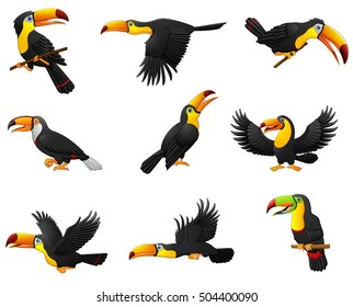 Vector illustration of Set of toucans cartoon