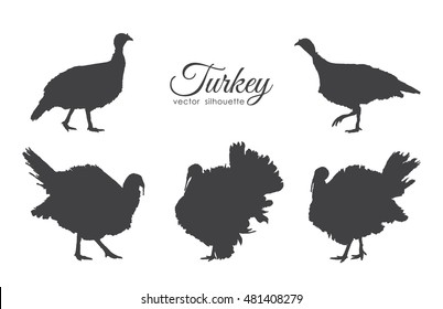 Vector illustration: Set of  turkeys silhouette isolated on white background.