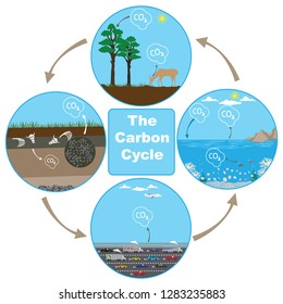 Vector illustration showing the Carbon Cycle in nature.