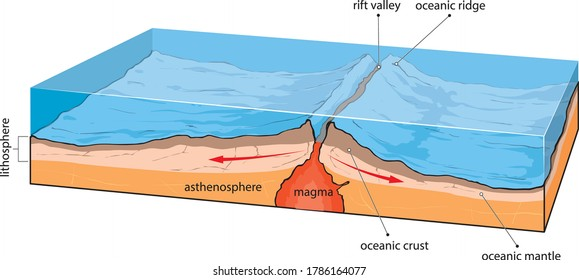 Vector illustration shows divergence of oceanic plates.