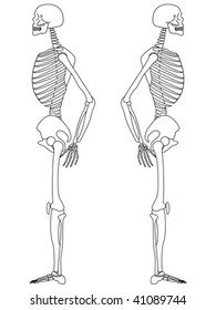 vector illustration of side view of male skeleton