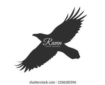 Vector illustration: Silhouette of flying Raven isolated on white background. Black bird in fly.