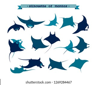 Vector illustration with silhouette of manta ray on a white background. Set of underwater animal - mantas.
