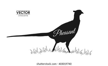 Vector illustration: silhouette of pheasant.
