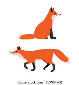 Vector illustration of sitting and walking red foxes isolated on white background