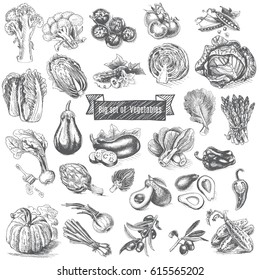 Vector illustration sketch - big set of vegetables.