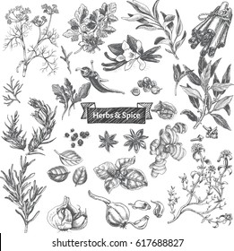 Vector illustration sketch - eco shop. Set of herbs.