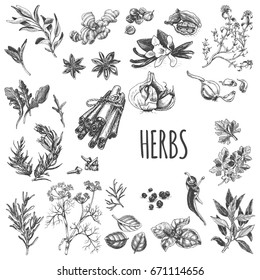 Vector illustration sketch - eco shop. Set of spices and herbs.
