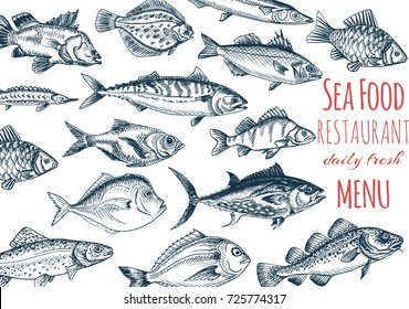 Vector illustration sketch - fish menu restaurant. Card menu seafood. vintage design template, banner.
