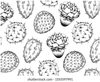 Vector illustration of sketch hand drawn pattern with tropical cacti and flowers isolated on white background. Desert cactus wallpaper. Vintage, botanical, mexican, californian style.