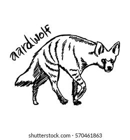 vector illustration sketch hand drawn with black lines of aardwolf isolated on white background