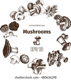 Vector illustration sketch - mushrooms - Russula mushrooms, Truffle, Honey mushrooms, Field mushrooms, Shiitake, Boletus, Ceps, Chanterelle