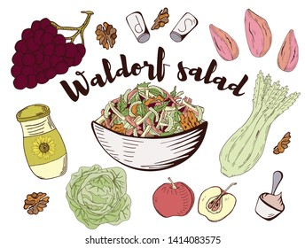 Vector illustration sketch - Waldorf Salad marketCard menu. Vintage design template, banner.