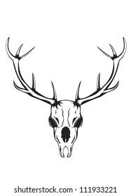 Vector an illustration of skull of an artiodactyl animal with horns