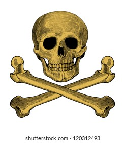 Vector illustration of skull and crossbones in engraved style  Isolated, grouped, transparent background