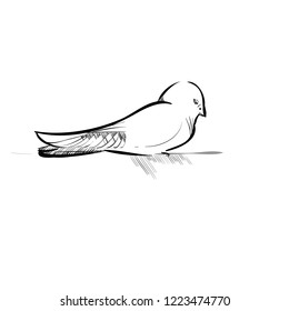 Vector Illustration of a Small Bird. Sketched Little Chick. Tit or Sparrow.  Monochrome Freehand Drawing. Linear Graphic. Stylized Black and White Birdie. Realistic Pen Drawing Imitation. Animal Art.