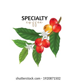 Vector illustration of Specialty coffee,  Branches of coffee tree with leaves and berry