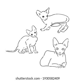 Vector illustration of a sphynx cat with a liner isolated on a white background. For printing on clothes, paper, logo, icon