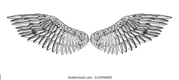 Vector illustration of a spread bird or angel wings. Vintage hand drawn etching, tattoo art style.