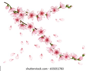 Vector illustration of spring bloom branch with pink flowers, buds. Realistic design isolated on white. Blooming cherry tree twigs, apple, peach or apricot blossom, flowering. Flying petals.