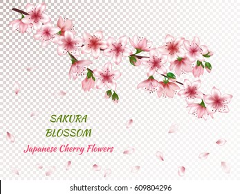 Vector illustration of spring blossom branch with pink flowers, buds and falling petals. Realistic design isolated on transparency grid with place for text. Greeting or invitation card template.