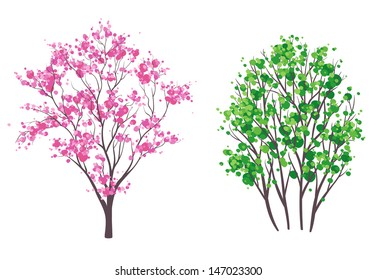 Vector illustration: spring and summer trees, isolated on white