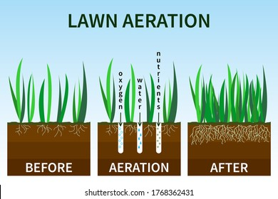 Vector illustration of stages lawn aeration. Before and after steps. Concept of lawn grass care, gardening service, benefits of aeration. Water, air and fertilizer having easy access to soil