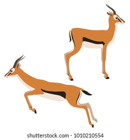 Vector illustration of standing and running Thomson's gazelles isolated on white background