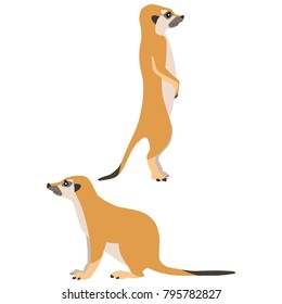Vector illustration of standing and sitting meerkats isolated on white background