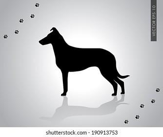 Vector illustration of standing smooth collie champion