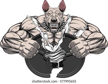 Vector illustration of a strong  bullterrier with big biceps, break barbell, bodybuilder