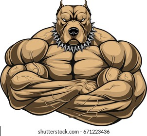 Vector illustration of a strong pitbull with muscles, bodybuilder, in front of a white background