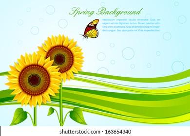 vector illustration of sunflower for spring background