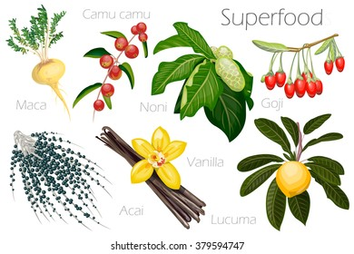 Vector illustration of a super food