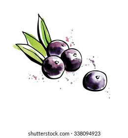 Vector illustration of super food Acai berry. Organic healthy dietary supplement. Black outlines and bright watercolor stains, splashes and drips.