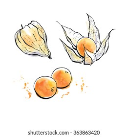 Vector illustration of super food Golden berries or Physalis. Organic healthy dietary supplement. Hand drawn isolated objects on white background. Black outlines and bright watercolor stains and drips