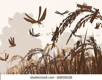 Vector illustration of a swarm of locusts attacking rice plants and threatening food security
