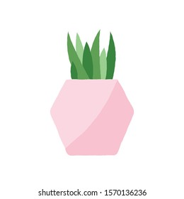 Vector illustration of a textured succulent in a pastel pink geometric plant pot. Houseplant graphic.