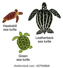 Vector illustration of three kinds of turtles. Brown hawksbill sea turtle, black leatherback sea turtle and green sea turtle
