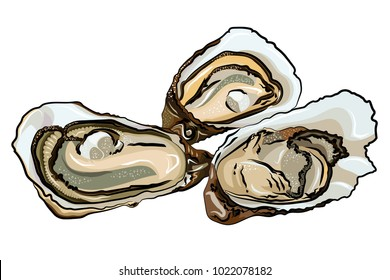 A vector illustration of three opened oysters with pearls inside, isolated on a white background