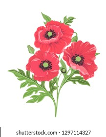 Vector illustration of three red poppies isolated on white background. Floral Botanical illustration for decor design or holiday greeting template-vector.