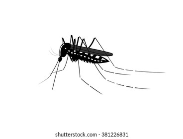 Vector illustration of a tiger mosquito